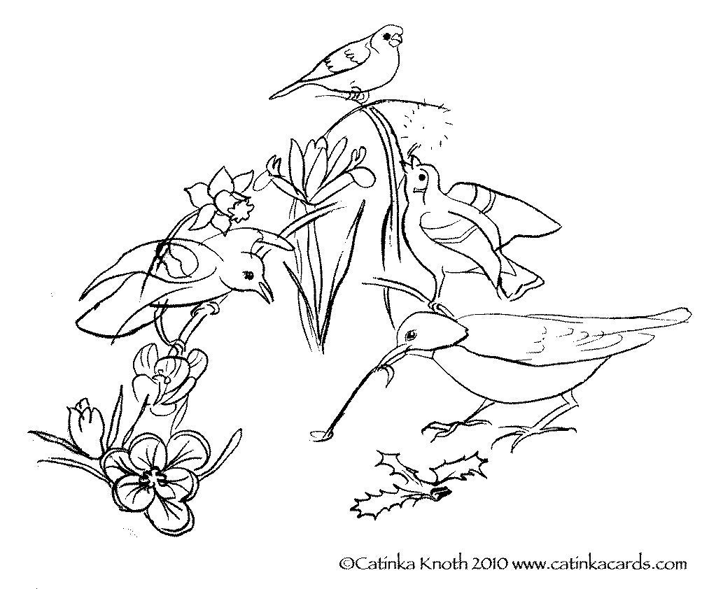 spring birds coloring pages spring bird coloring page free printable coloring pages coloring spring pages birds