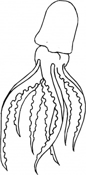 squid coloring pages squid coloring pages to download and print for free squid coloring pages