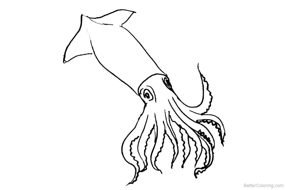 squid coloring pages squid coloring pages to printable marine animals squid coloring pages