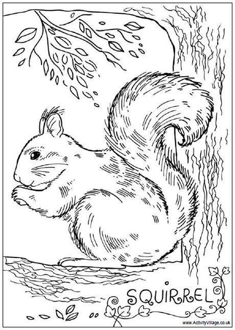 squirrel colouring crazy cartoon squirrel running with acorn coloring page squirrel colouring