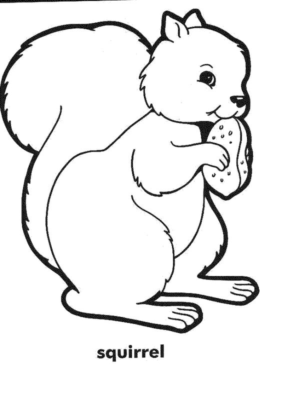 squirrel colouring free printable squirrel coloring pages for kids colouring squirrel