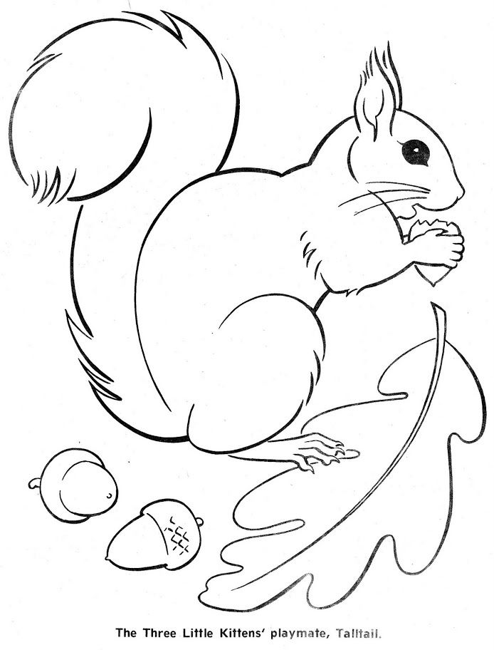 squirrel colouring free squirrel coloring pages squirrel colouring