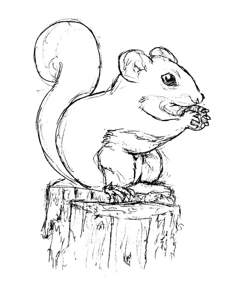 squirrel colouring free squirrel coloring pages squirrel colouring 1 1