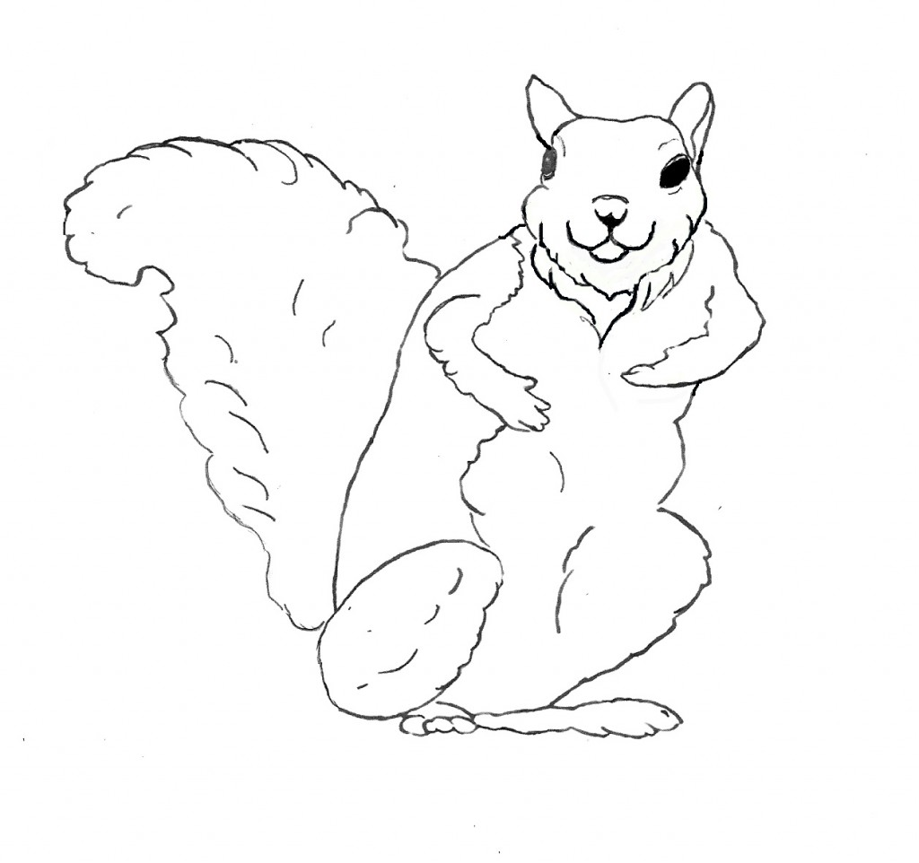 squirrel colouring pinterest colouring squirrel