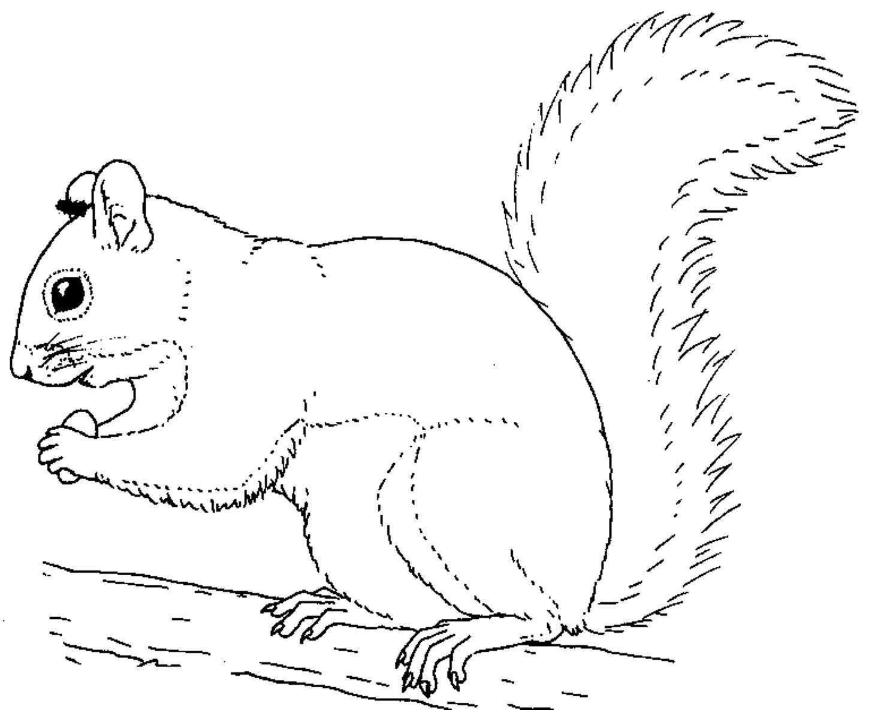 squirrel colouring printable squirrel coloring pages coloring me colouring squirrel