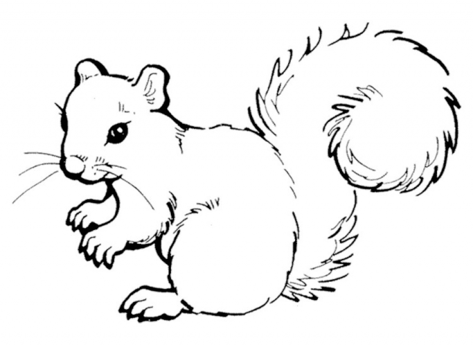 squirrel colouring squirrel coloring pages coloringpagesabccom colouring squirrel