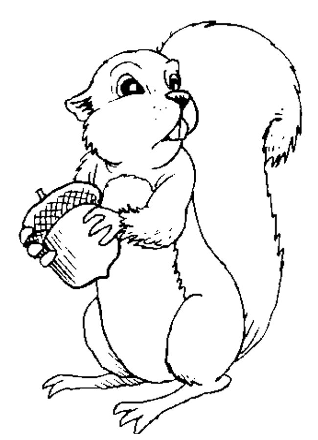 squirrel pictures to print free printable squirrel coloring pages for kids animal to print squirrel pictures