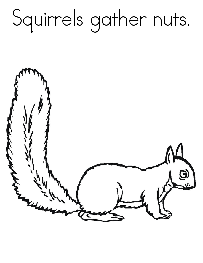 squirrel pictures to print printable squirrel template pictures squirrel to print
