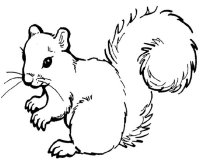 squirrel pictures to print the three little kittens squirrel coloring page fall pictures squirrel to print