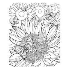 sunflower coloring pictures flowers letmecolor coloring sunflower pictures