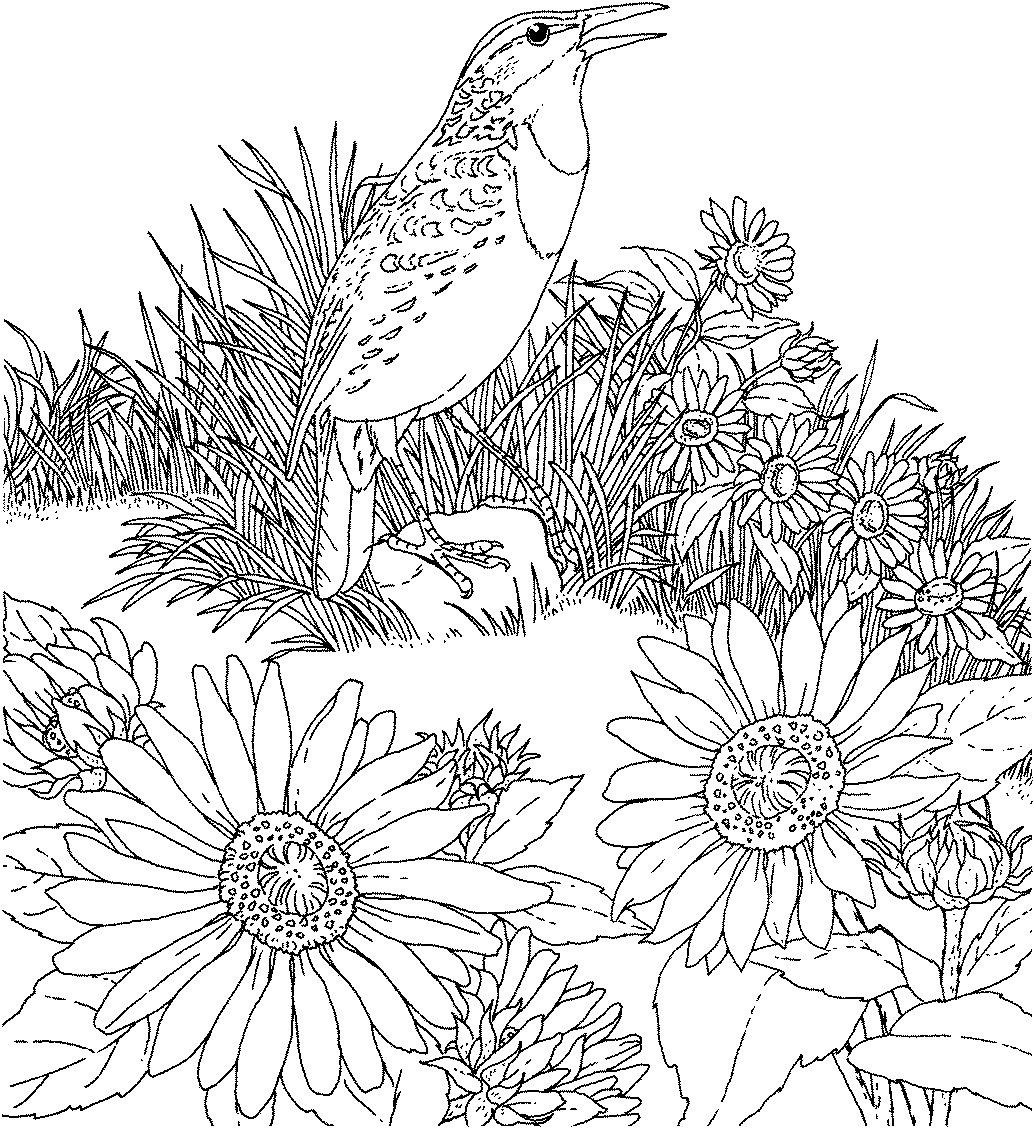 sunflower coloring pictures free coloring pages printable sunflower coloring pages coloring sunflower pictures