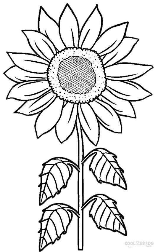 sunflower coloring pictures free coloring pages printable sunflower coloring pages sunflower coloring pictures