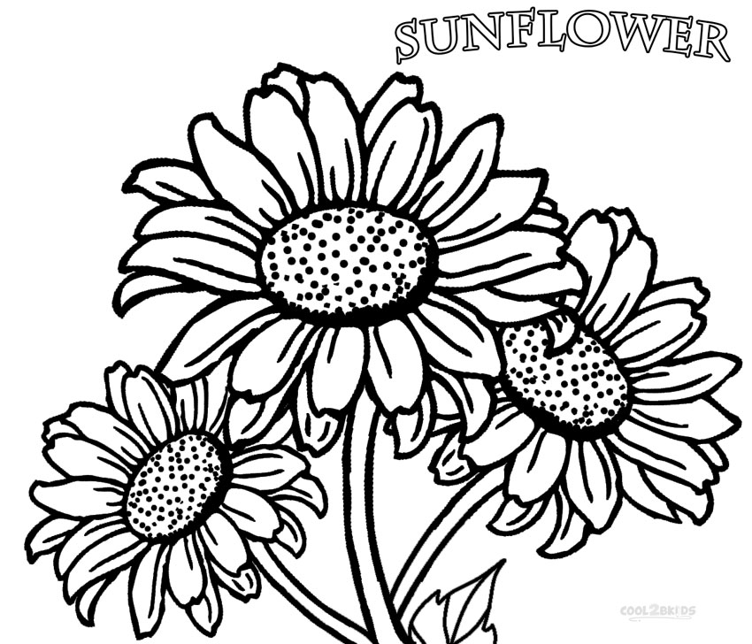 sunflower coloring pictures free printable sunflower coloring pages for kids pictures sunflower coloring