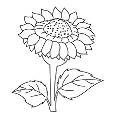 sunflower coloring pictures free printable sunflower coloring pages for kids pictures sunflower coloring 1 1