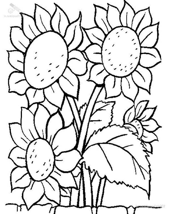 sunflower coloring pictures sunflower coloring book pages sketch coloring page sunflower pictures coloring