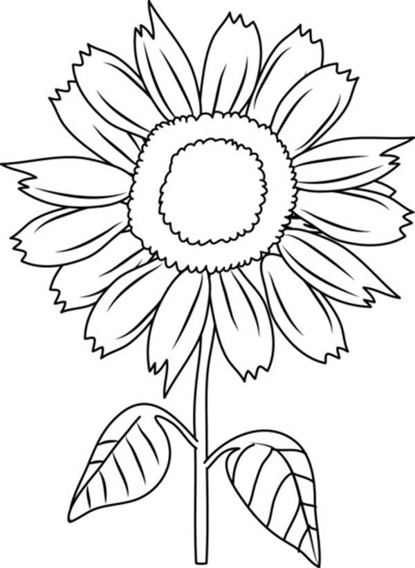 sunflower coloring pictures sunflower drawing images free at getdrawingscom free sunflower pictures coloring