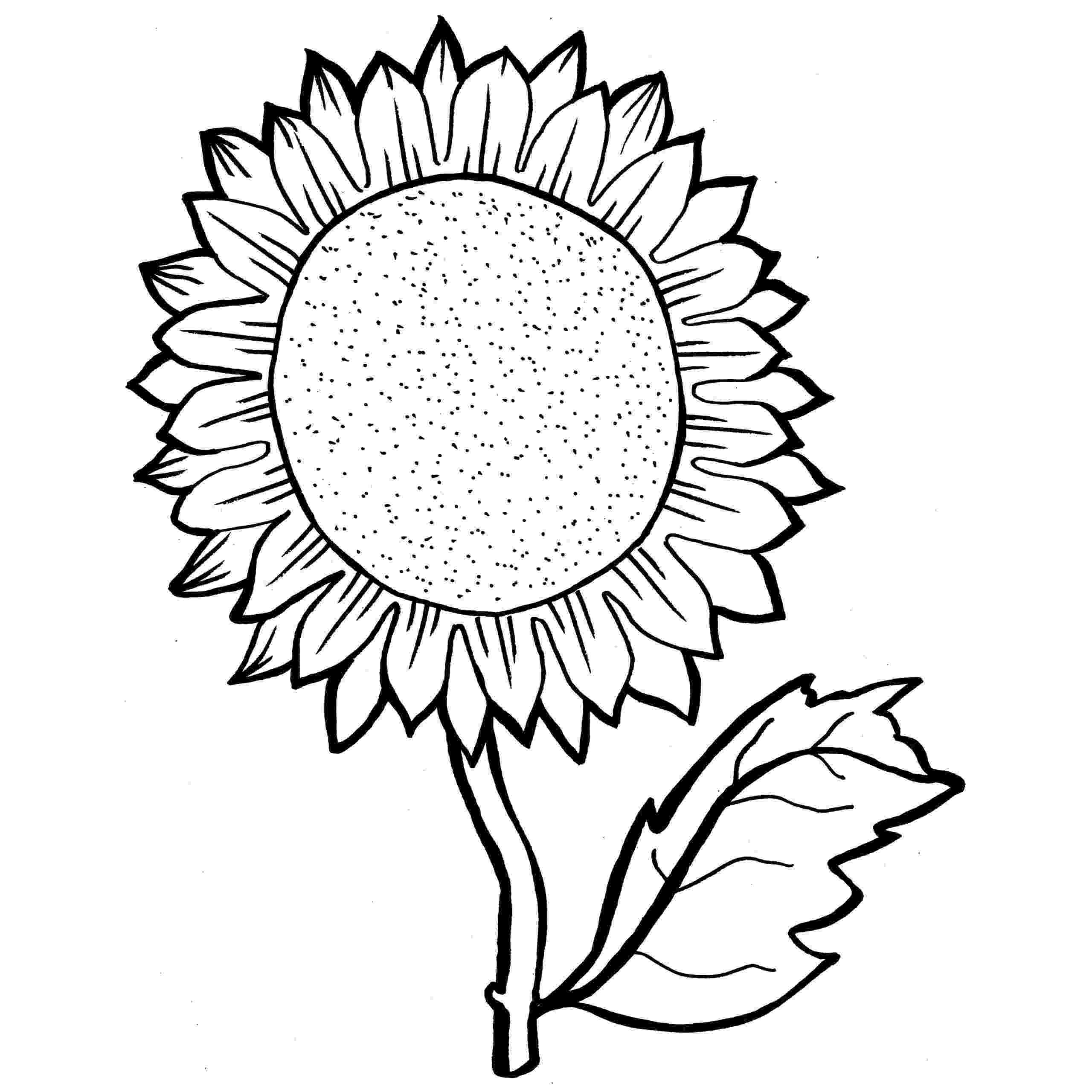 sunflower to color free coloring pages printable sunflower coloring pages to color sunflower
