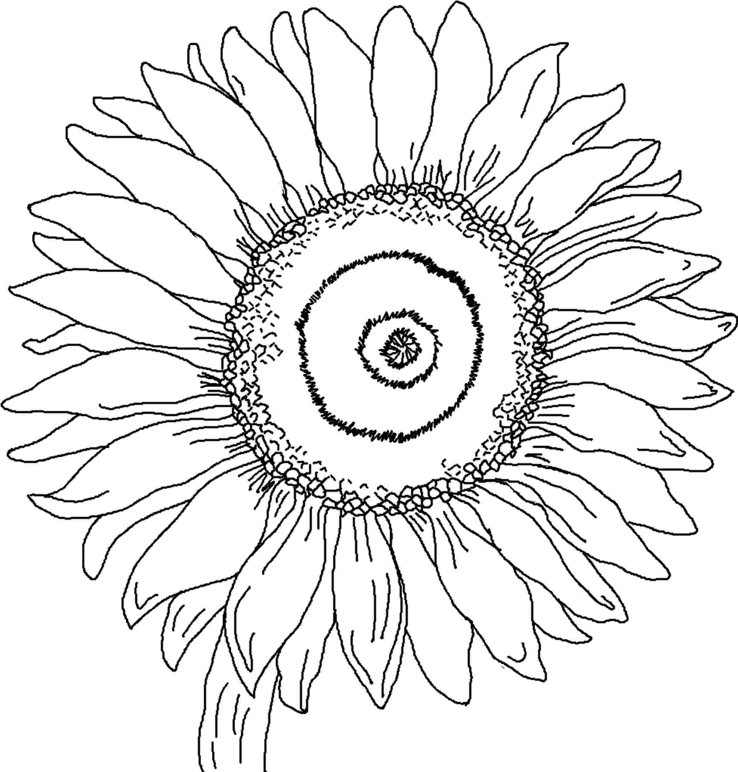 sunflower to color free printable flower coloring pages for kids best color to sunflower
