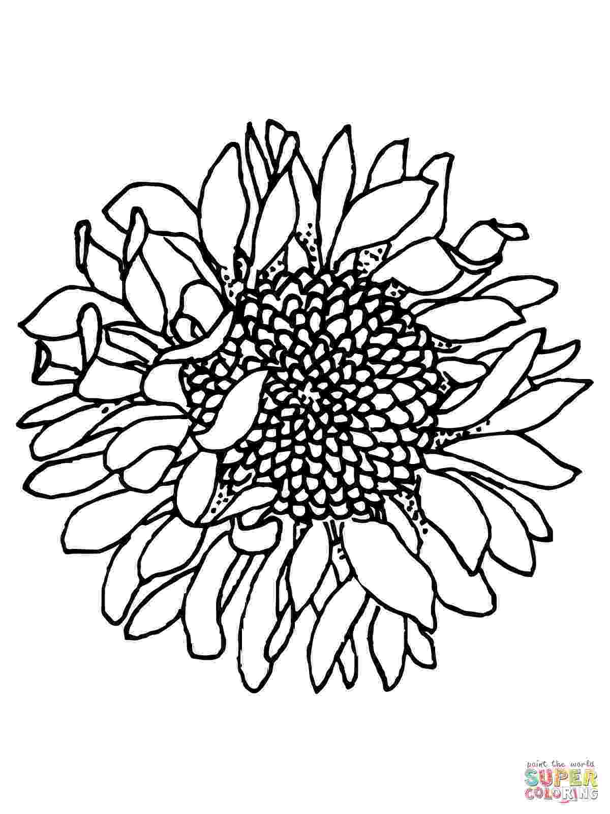 sunflower to color sunflower coloring page getcoloringpagescom to sunflower color