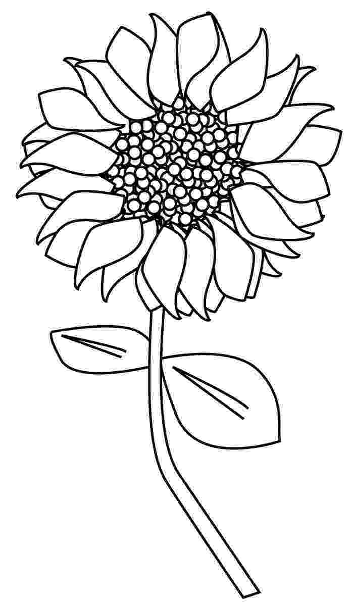 sunflower to color sunflower coloring pages to color sunflower
