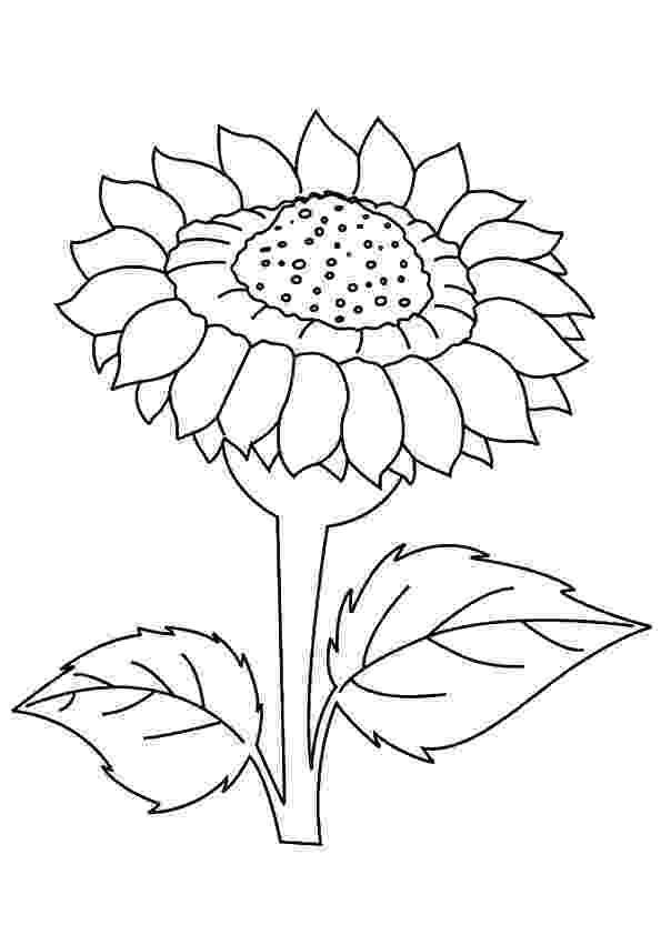 sunflower to color top 10 beautiful sunflower coloring sheets for little color to sunflower