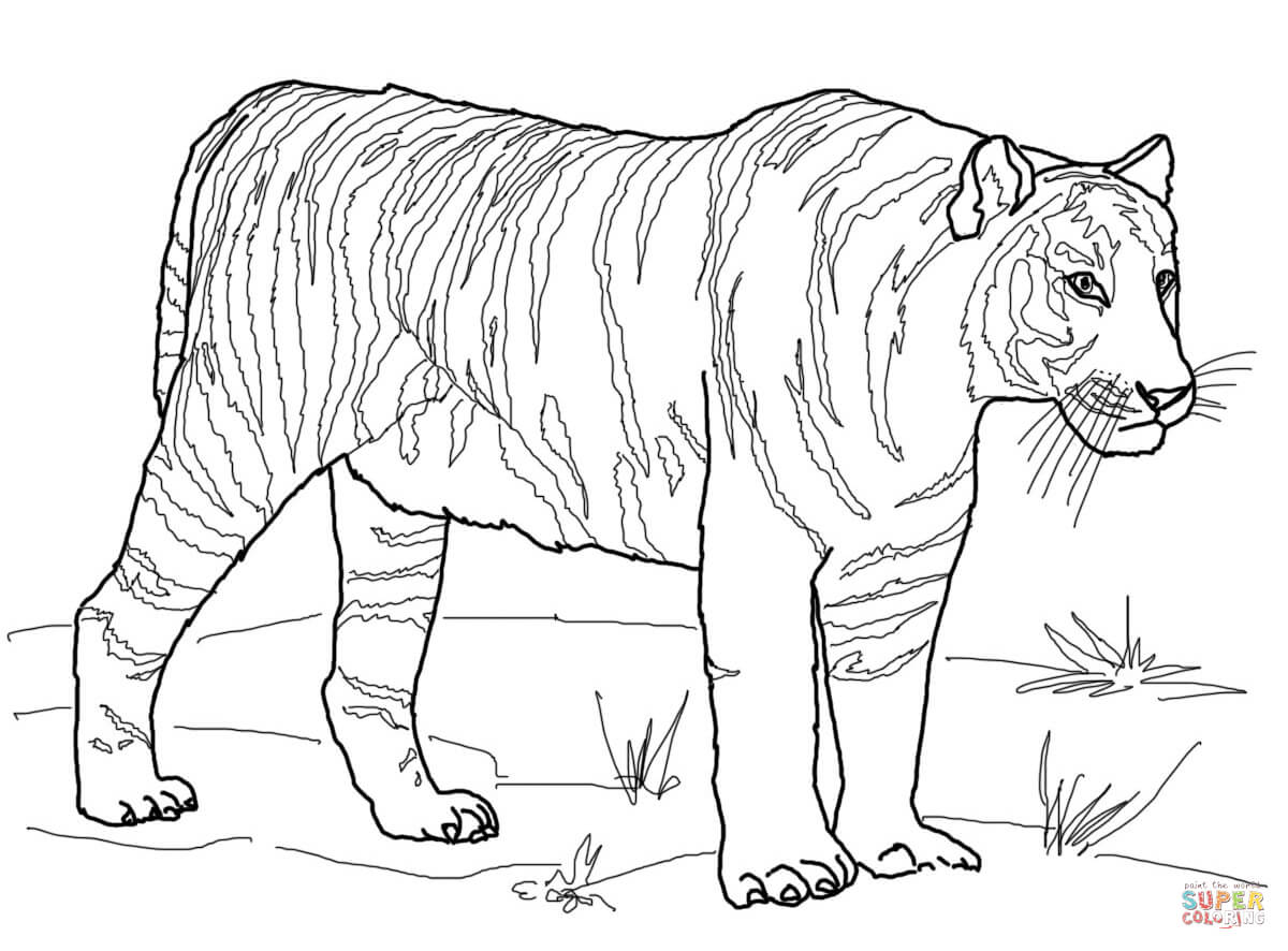 tiger coloring book pages 18 best zooclopédia images on pinterest crafts for kids pages coloring tiger book