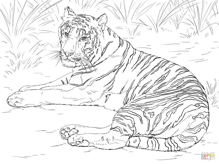 tiger coloring book pages white bengal tiger coloring page free printable coloring pages coloring book tiger