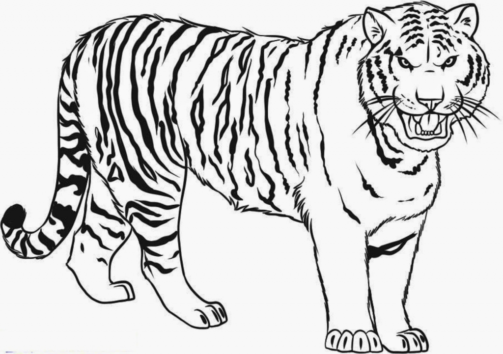 tiger coloring page free tiger coloring pages coloring page tiger