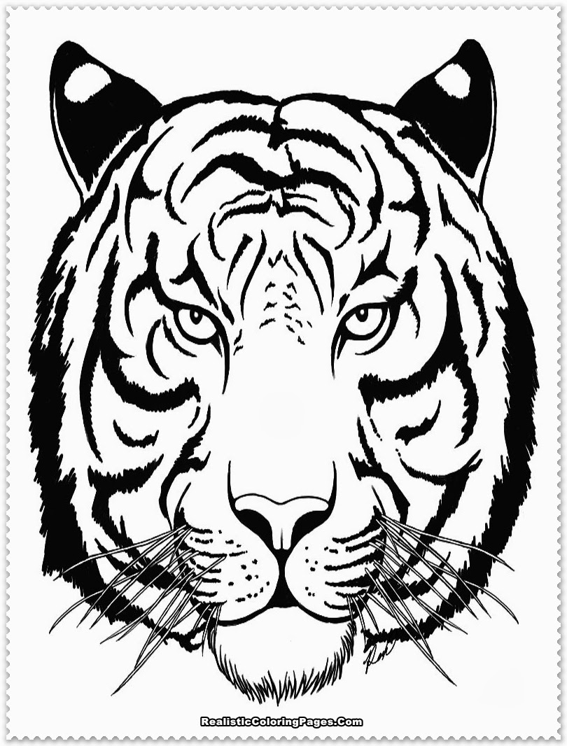 tiger coloring page free tiger coloring pages coloring tiger page