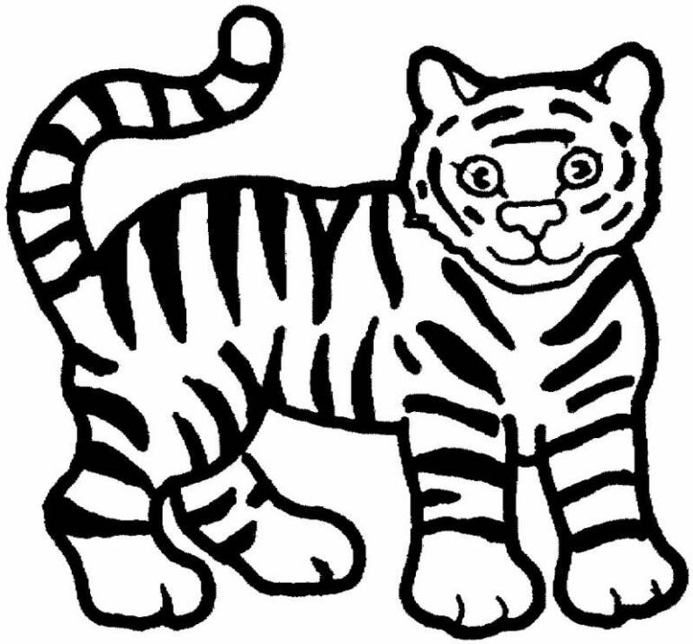 tiger coloring page tiger print drawing at getdrawingscom free for personal coloring page tiger