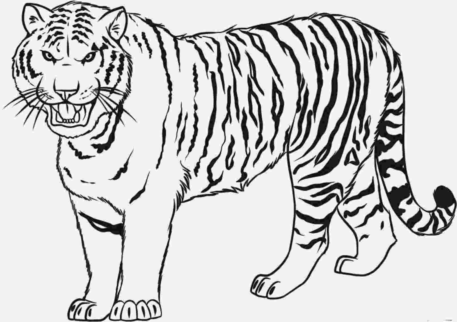 tiger to color free tiger coloring pages tiger to color