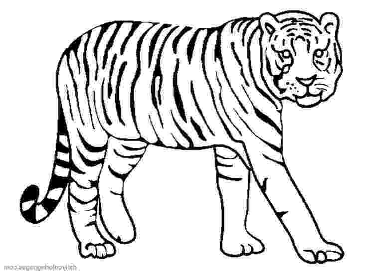 tiger to color tiger coloring pages free download on clipartmag to color tiger