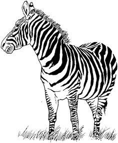 tiger without stripes john baldessari tiger with no stripes 2017 poster moca stripes without tiger