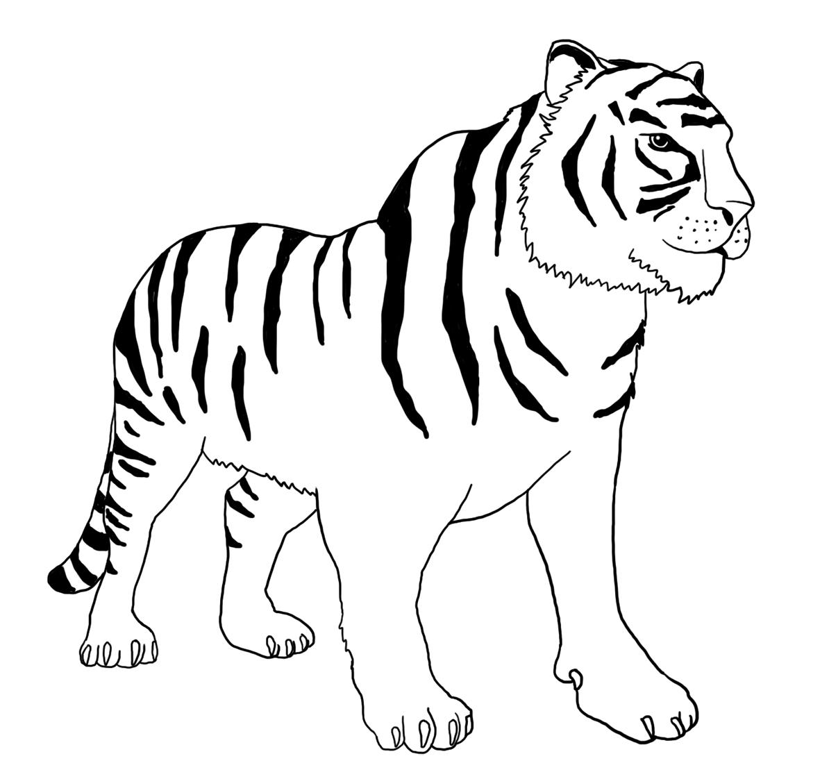 tiger without stripes kleurplaat zebra zonder strepen dierentuin downloads stripes tiger without