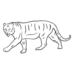 tiger without stripes stripeless tiger clip art at clkercom vector clip art stripes tiger without
