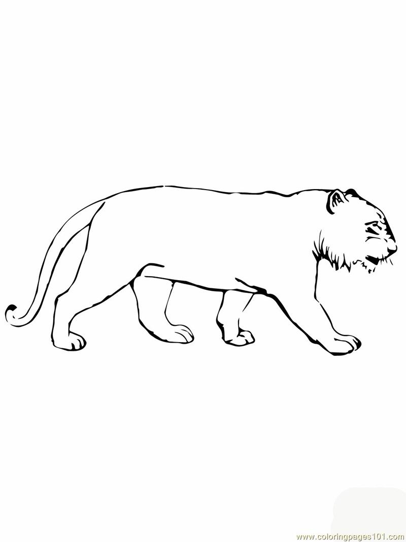tiger without stripes tiger standing looking and watching outline clip art at stripes tiger without