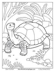 tortoise pictures to colour box turtle coloring page at getcoloringscom free colour tortoise to pictures