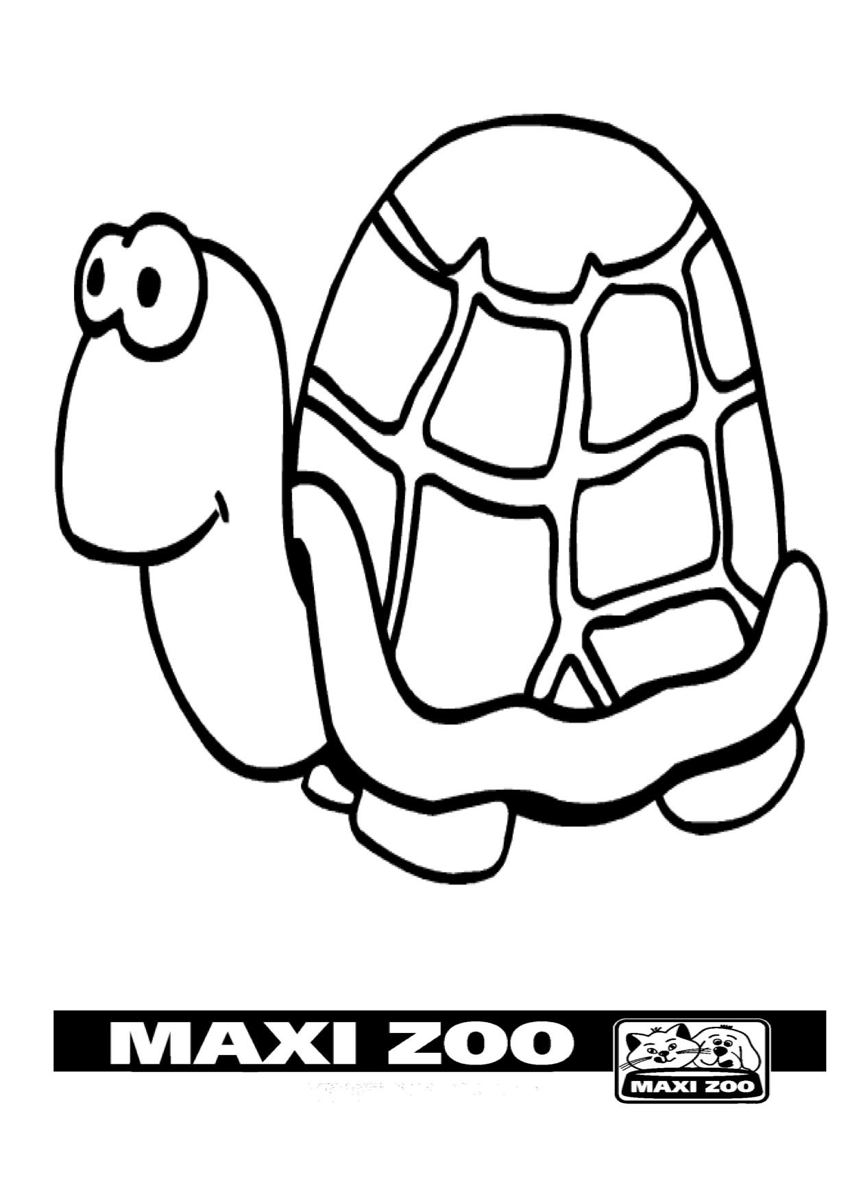 tortoise pictures to colour fashionable tortoise pictures to colour 9 printable to tortoise pictures colour