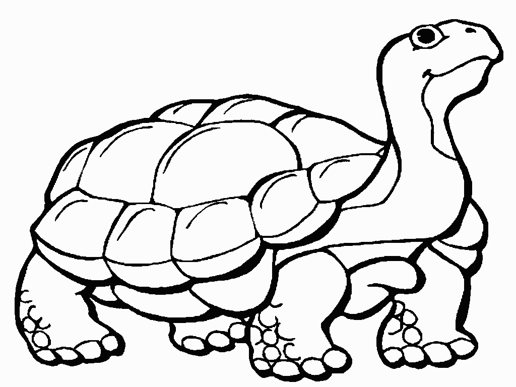 tortoise pictures to colour gopher tortoise clipart 20 free cliparts download images to pictures tortoise colour