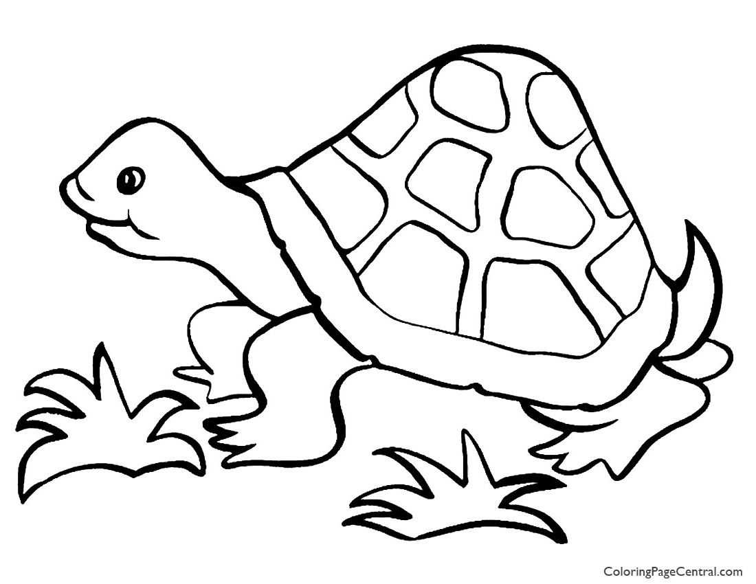 tortoise pictures to colour how to draw a tortoise easy and simple steps youtube colour pictures to tortoise