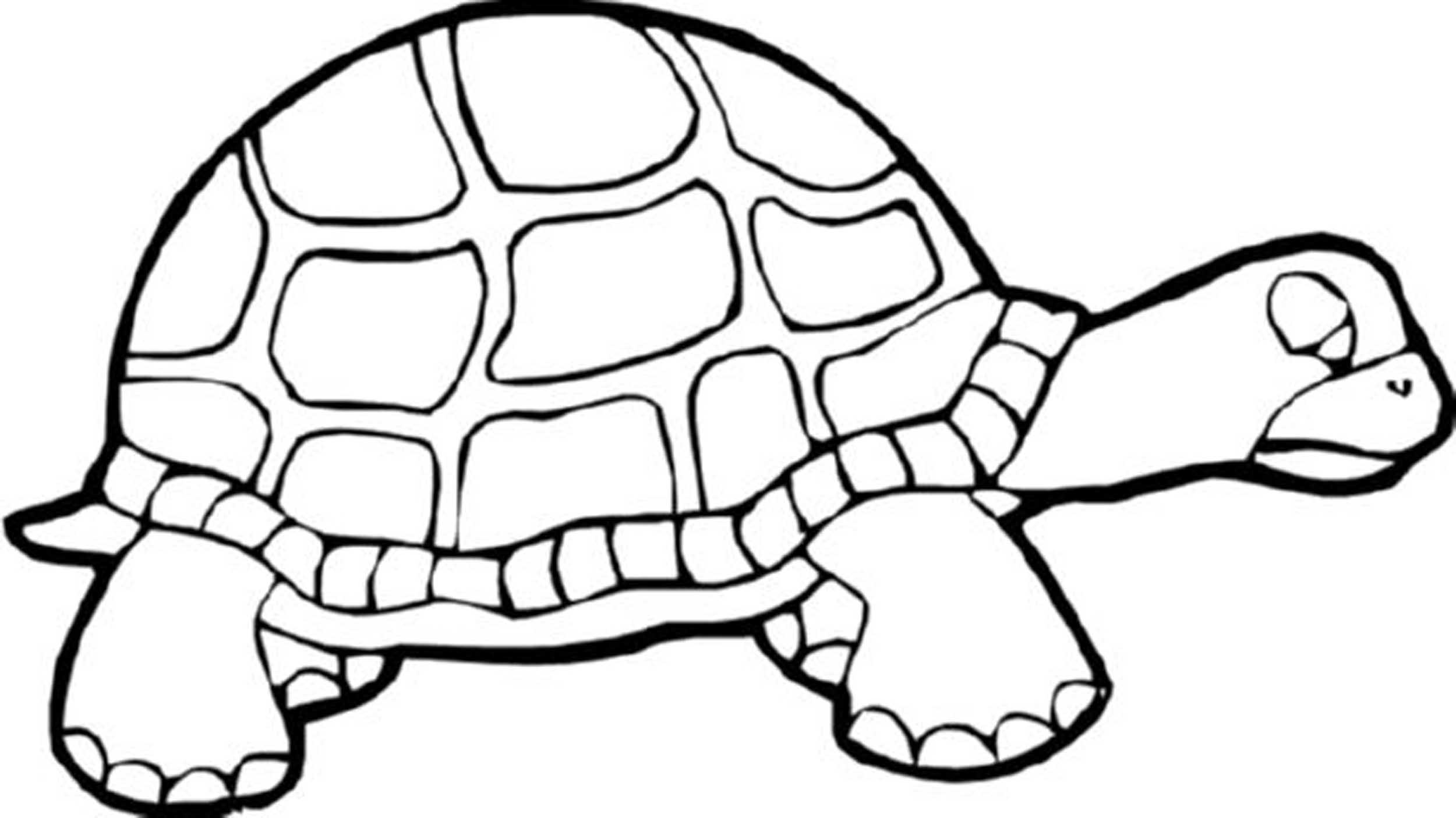 tortoise pictures to colour sulcata tortoise coloring page free printable coloring pages colour to pictures tortoise