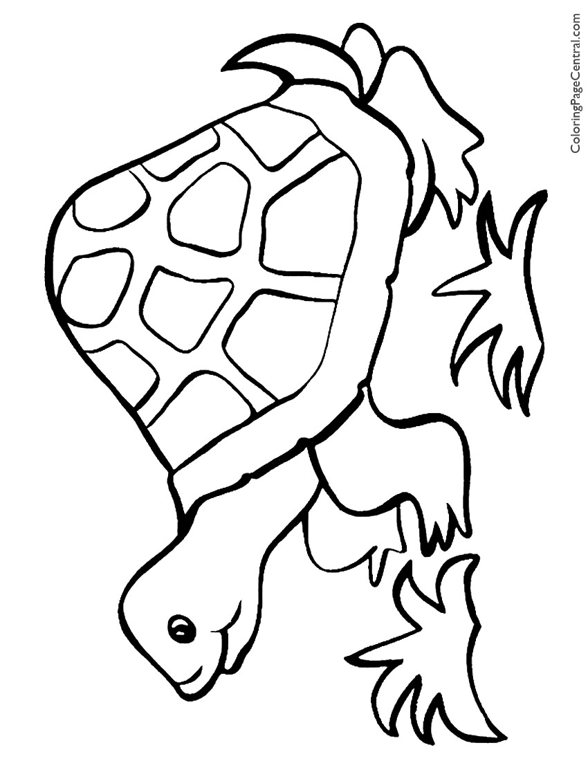 tortoise pictures to colour tortoise 01 coloring page coloring page central to colour pictures tortoise