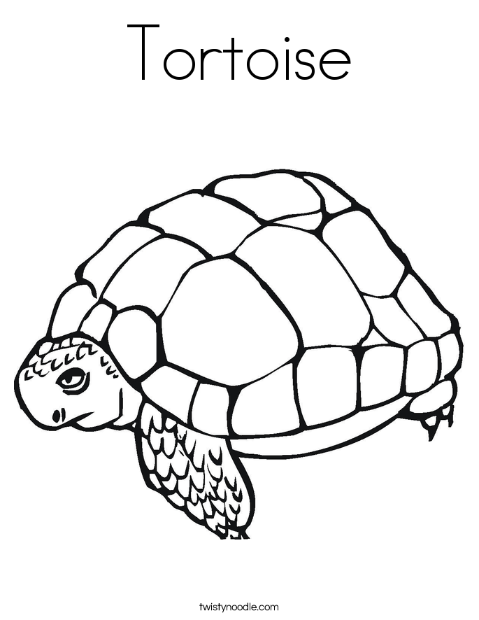 tortoise pictures to colour tortoise coloring page twisty noodle pictures to colour tortoise