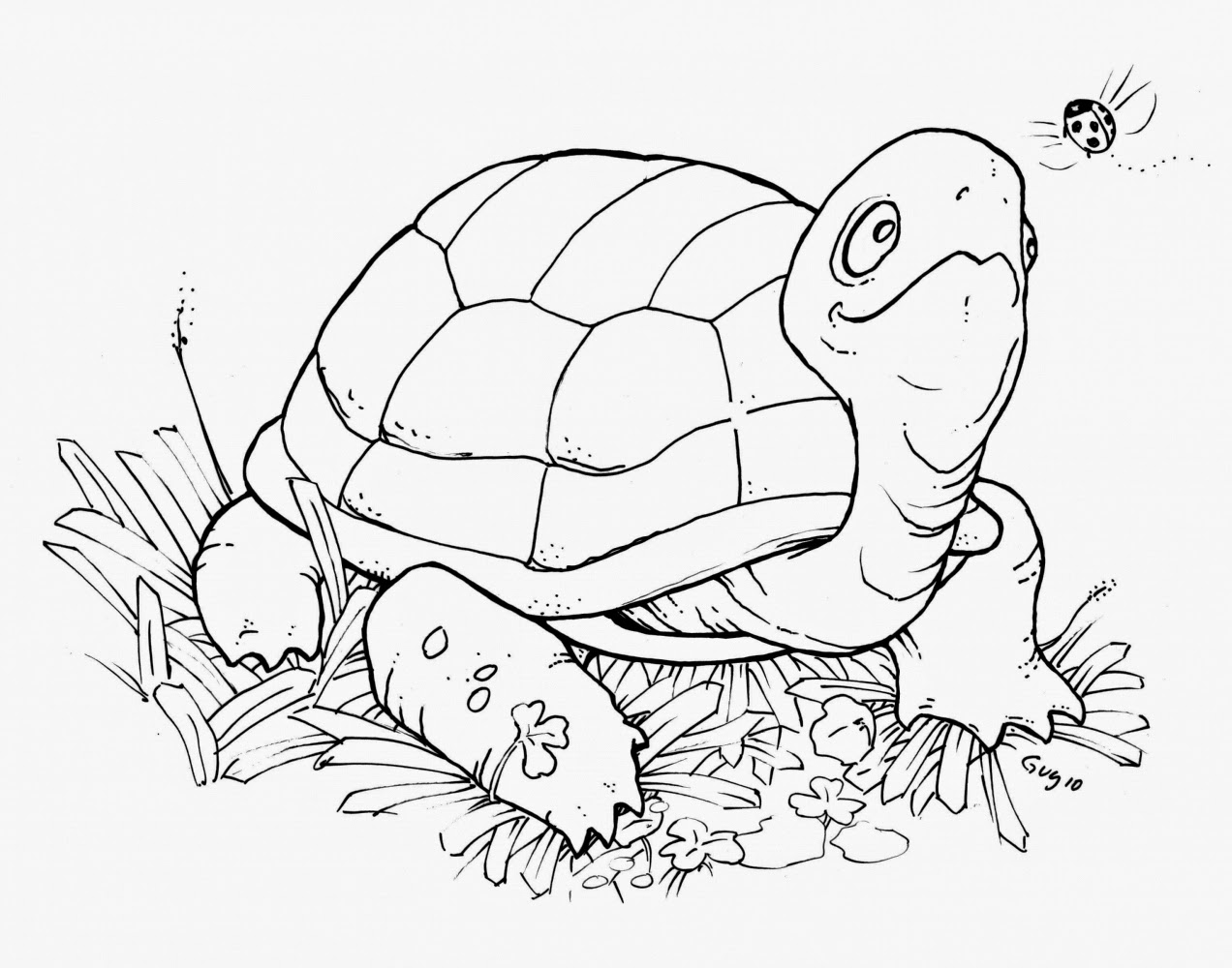 tortoise pictures to colour walking tortoise turtle coloring page wecoloringpagecom pictures colour tortoise to