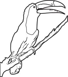 toucan pictures to print bird coloring pages to print toucan pictures
