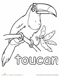 toucan pictures to print flying toucan coloring page free flying toucan online to toucan print pictures