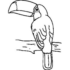 toucan pictures to print picture of toucan to color toucan coloring page free pictures toucan print to
