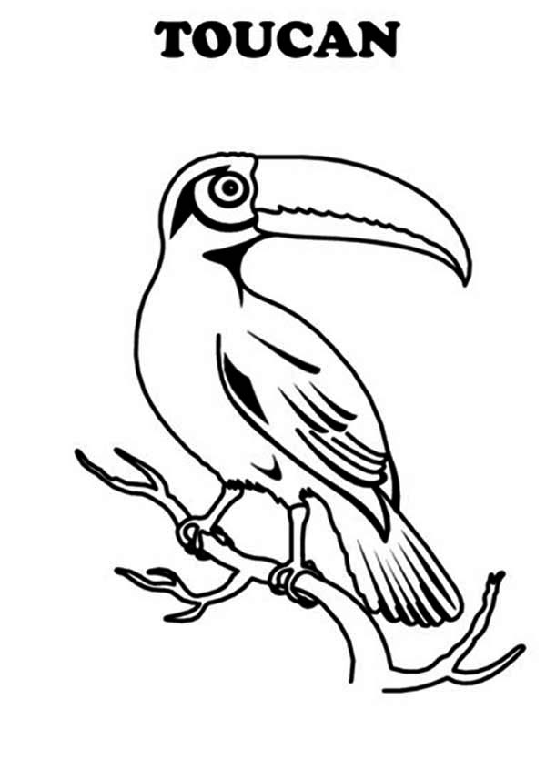 toucan pictures to print t is for toucan coloring page t is for toucan coloring toucan to pictures print