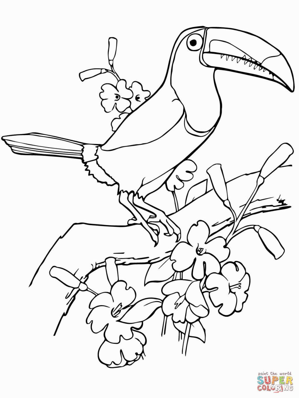 toucan pictures to print toucan audio stories for kids free coloring pages from to toucan print pictures