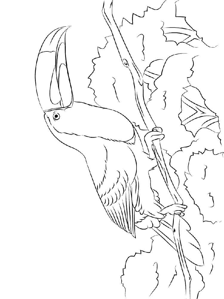 toucan pictures to print toucan coloring pages download and print toucan coloring toucan print to pictures